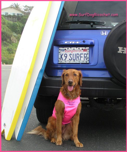 Ricochet, The PAWsome Surfing Dog 1