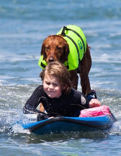Ricochet, The PAWsome Surfing Dog 3